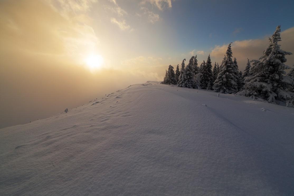 Sunshine from Lysec